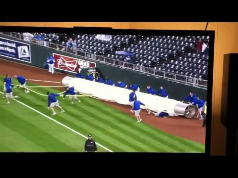 Guy falls under tarp being rolled out at Royals vs Mariners game