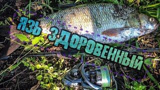 РЫБА МОЕЙ МЕЧТЫ ЯЗЬ ЗДОРОВЕННЫЙ Лучшая Рыбалка сезона 2020 СТРИТФИШИНГ
