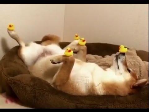 Doge know your meme ocean doge solutioingenieria Choice Image