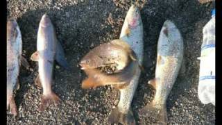 Рыбалка на Камчатке . Рыболовные туры на Камчатку.