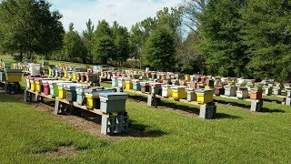 Our Fall Honey Bee Colonies Going Into Winter