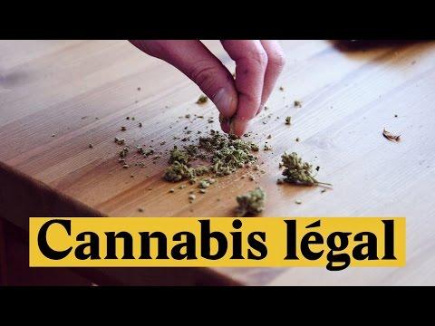 Cannabis CBD en vente libre