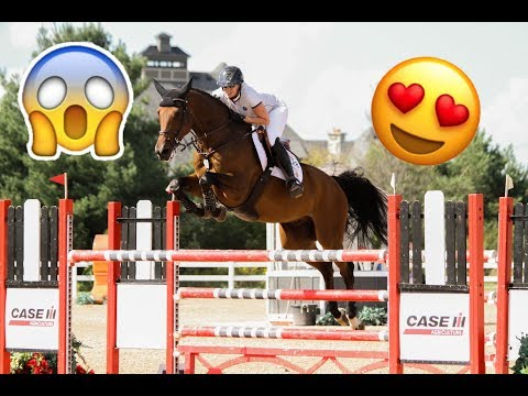 Best Horse Breeds Used For Show Jumping