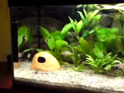 das aquarium 60l bio co2 anlage youtube. Black Bedroom Furniture Sets. Home Design Ideas