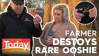 Rare Ooshie destroyed on live TV by outraged farmer | Today Show Australia