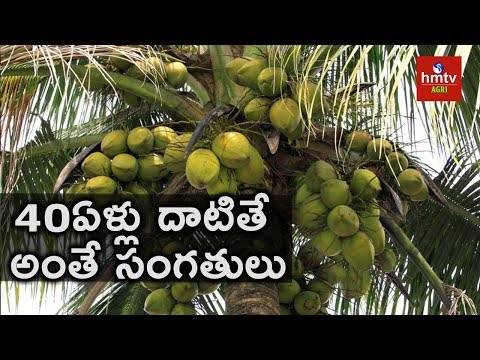 Methods to Grow Your Coconut Trees Yield More | hmtv Agri