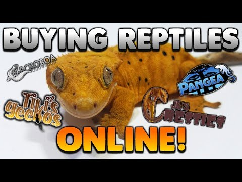 Watch This BEFORE You Buy A Reptile Online! Buyers Guide!