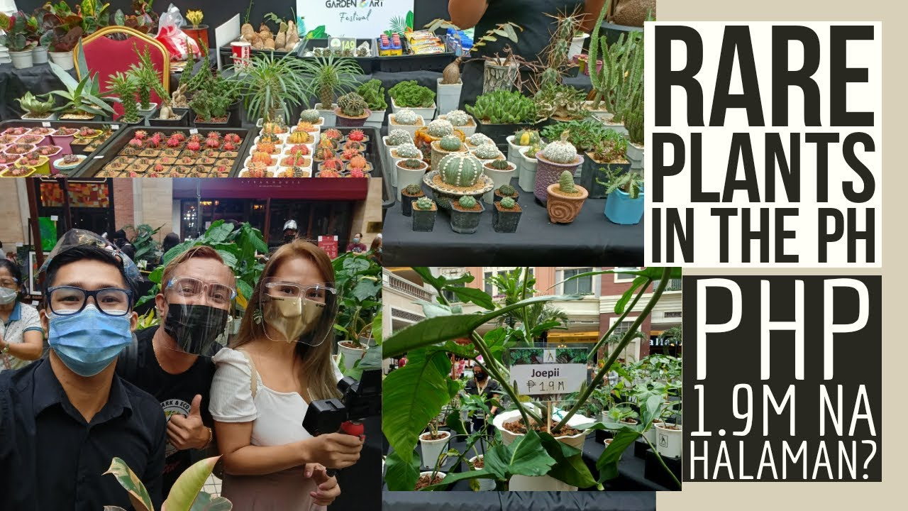 Rare & Collectible Plants Sa Pinas - Arid & Aroids Event (PHP 1.9-10M Na Halaman?)