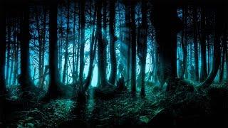 Самый Страшный Лес Планеты | Гиблые Места | Дорога смерти