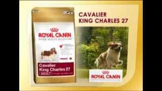 Royal Canin Cavalier King Charles Film