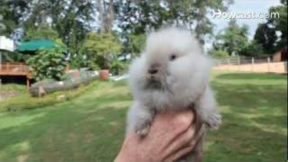 What Is a Lionhead Rabbit?   Small Pets