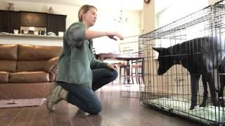 """PK9 - How- To: Teaching the """"Wait"""" Command in Crate/Kennel"""