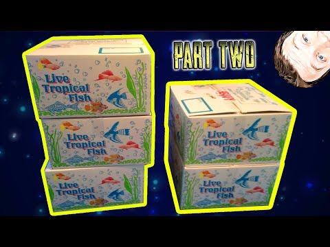 Massive Tropical Fish Unboxing 5 Boxes African Cichlids Pt2