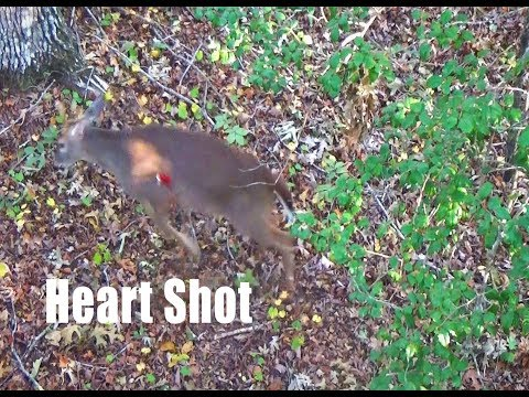 Epic heart shot on buck! {Anderson County SC}