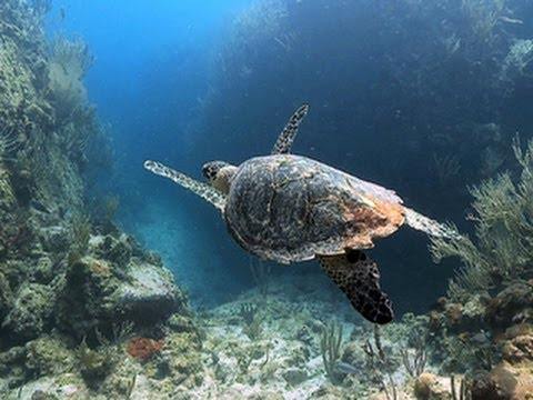 Nature: Marine life of the U.S. Virgin Islands