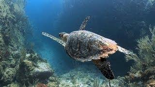 Nature: Marine life of the U.S. Virgin Islands