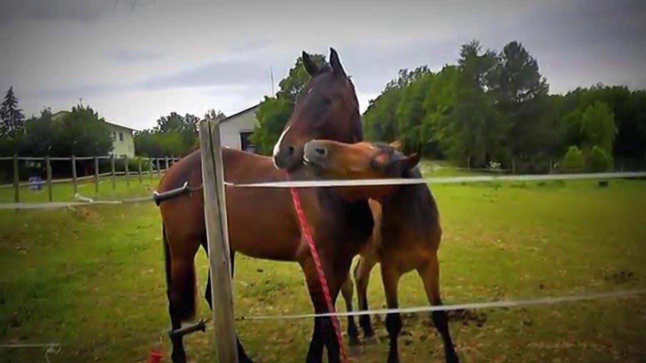 FUNNY BABY HORSE - YouTube |Youtube Pets Funny Horses