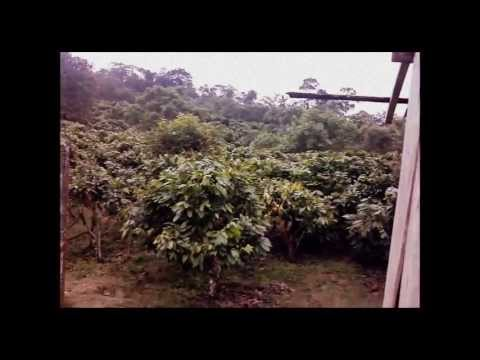 For Sale 29 Hectare (71.66 acre) Finca Santo Domingo Ecuador Cacao Producing Tourism Retirement