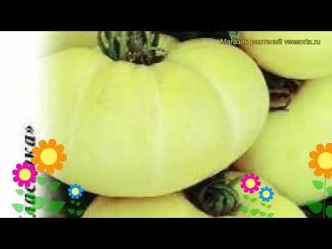 Томат Большой пломбир. Краткий обзор, описание характеристик, где купить семена solánum lycopérsicum