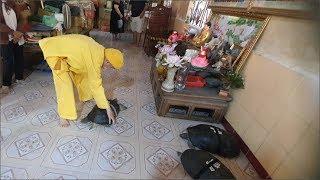 Chuyện lạ Việt Nam - 6 Cụ Rùa 107 Tuổi Ăn Chay Nghe Kinh Phật Và Biết Nghe Lời Sư Ông Ở Chùa Lá Sen