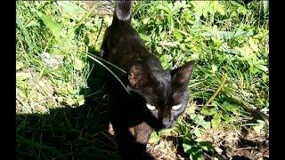 Черная Кошка Перебегает Дорогу к Счастью