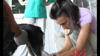 prihvatiliste za pse jazip vrbas jedan skoro obican dan u prihvatilistu