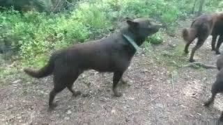 #Вот это дрессировка#животные#юмор#воспитание собак#