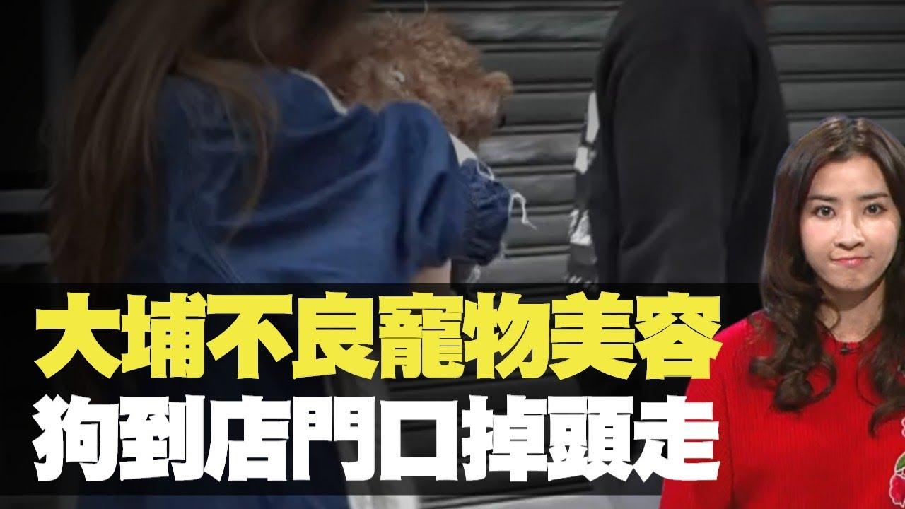 東張西望 大埔不良寵物美容 狗到店門口掉頭走 (TVB 潘梓鋒 利穎怡) bji 2.1 - YouTube