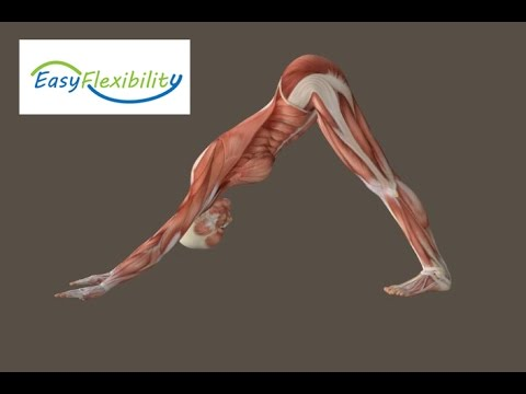 How to Downward Facing Dog Yoga Muscle Animation EasyFlexibility