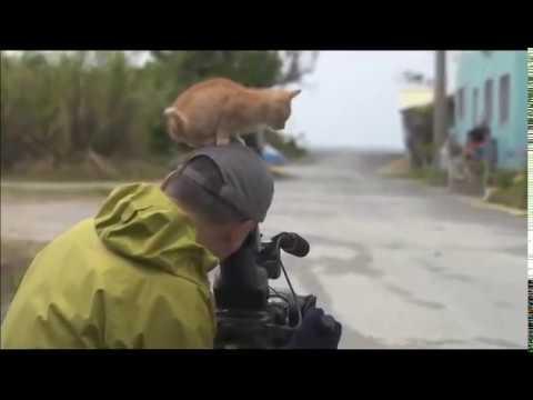 Kitten befriending a cameraman