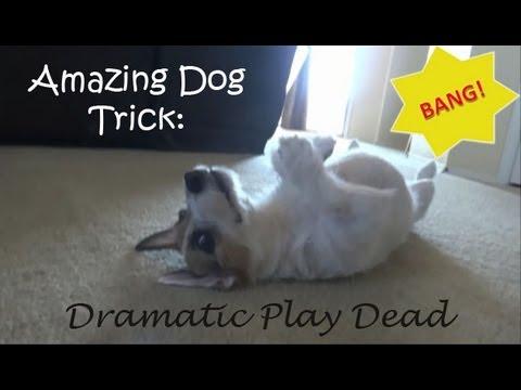 Jesse Dramatically Plays Dead: Amazing Dog Trick