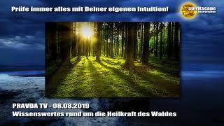 Wissenswertes rund um die Heilkraft des Waldes - PRAVDA TV
