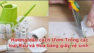 Hướng dẫn cách Ươm Trồng các loại Rau và Hoa bằng giấy vệ sinh