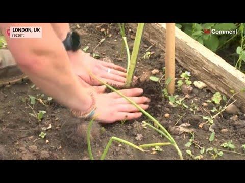 شاهد: حين يُستخدم الشعر في لندن كمادة طبيعية لتسميد التربة…