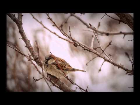 Devendra Banhrt Wake Up Little Sparrow