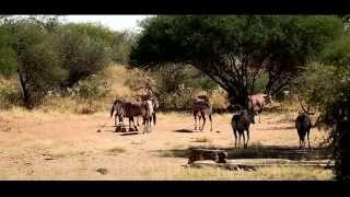 Dzika Afryka FILM Namibia 2014 Zbigniew J Boczek