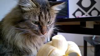Кот ест банан - Cat & Banana