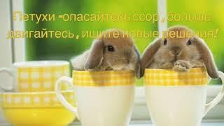 Фен-шуй прогноз на март 2019 месяц Огненного Кролика