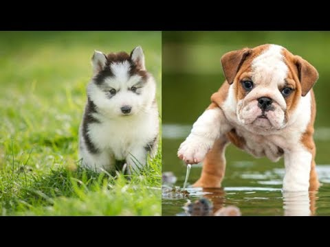 dog and cat funny video 2019|cute puppies and kittens doing funny things