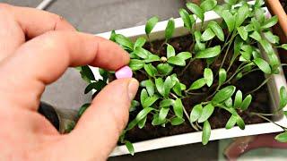 Сажайте эти овощи цветы и ягоды на рассаду в январе! Что посадить в январе на рассаду дома?