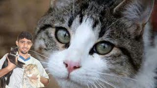 قصتي مع تربية اكثر من 30 قطة !! thumbnail