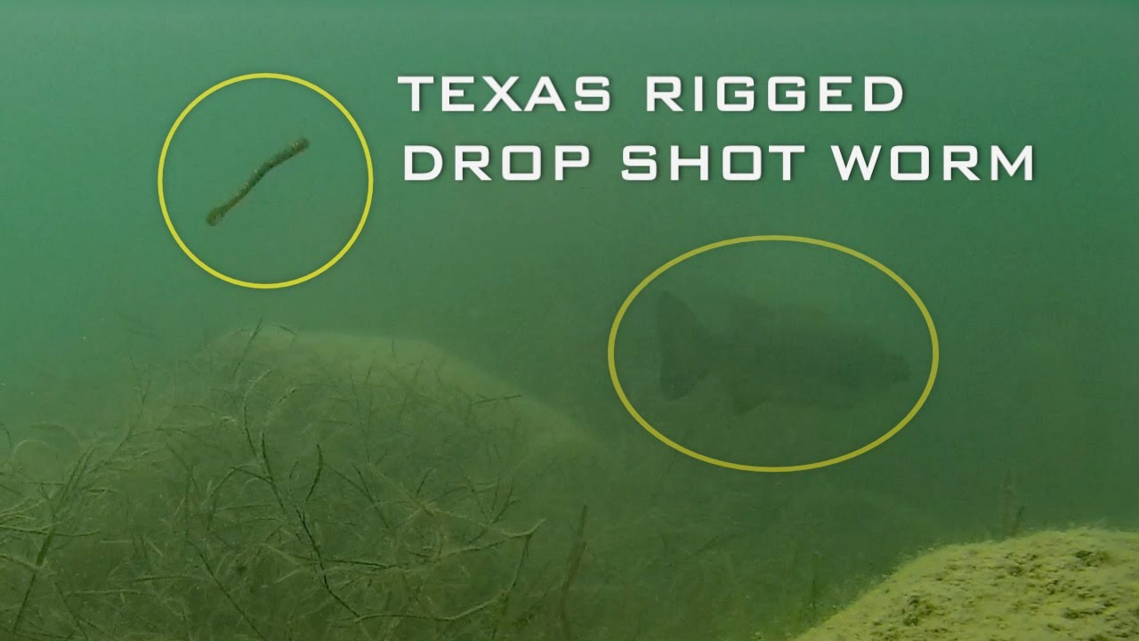 How to Drop Shot Grass Lines for Bass