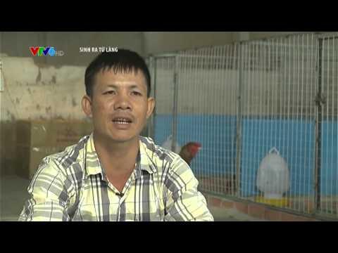 Tư vấn nuôi Gà Đông Tảo - Gà Tiến Vua Trang trại ...