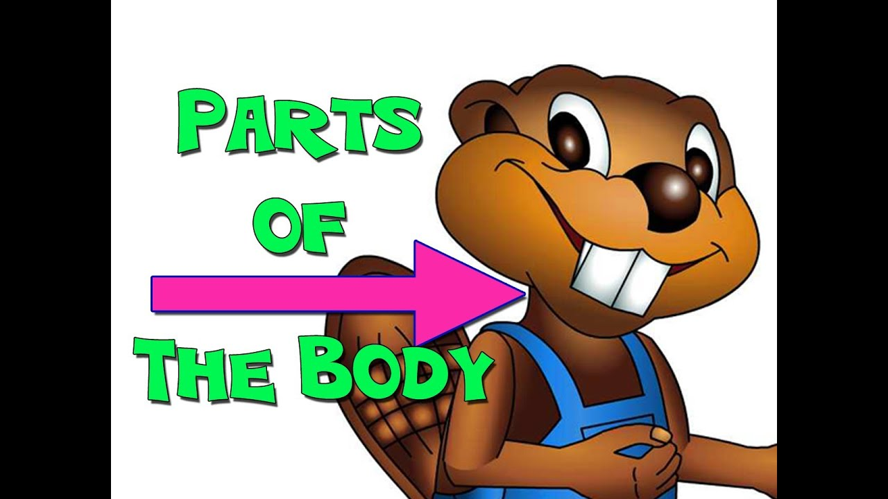 Parts of the Body - English for Kids