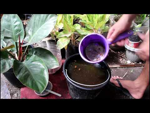 Bat Guano: Highly Effective Organic Fertilizer for Any Plants