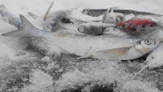 Ловля ЧЕХОНИ ЗИМОЙ ВОЛШЕБНАЯ ЛУНКА РАЗДАЕТ Зимняя рыбалка 2020 на мормышку