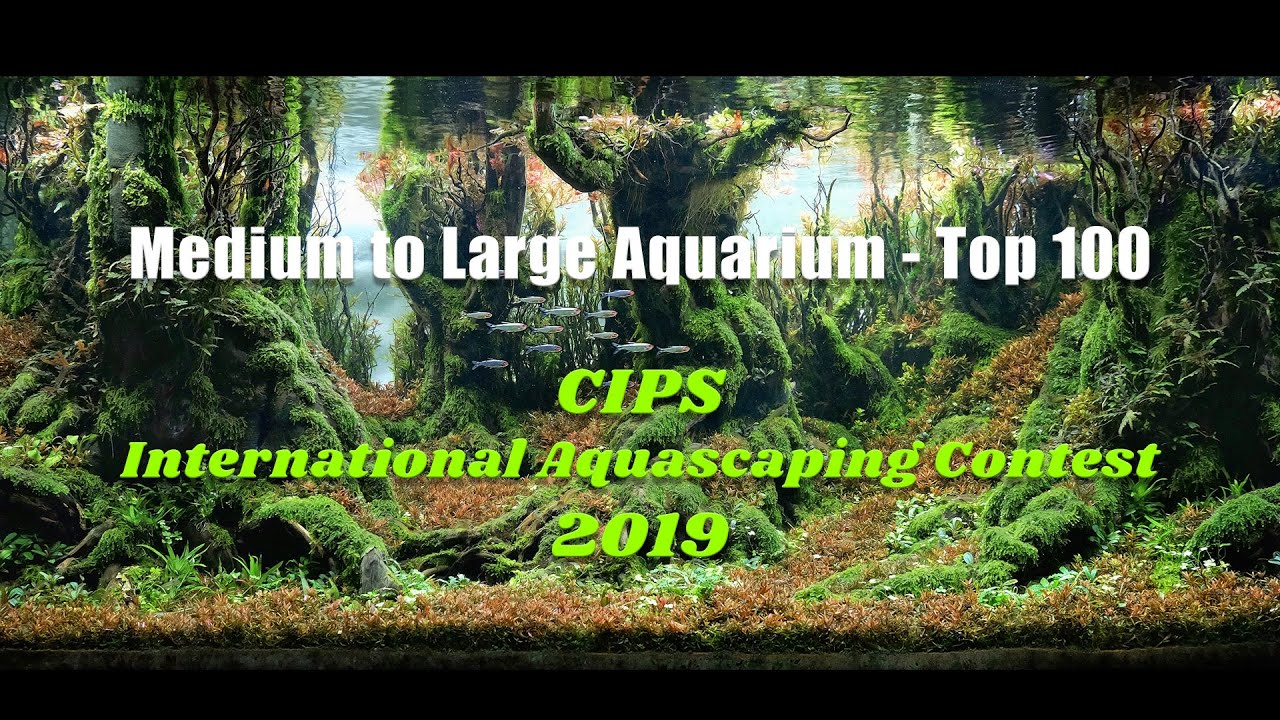 2019 Cips International Aquascaping Contest Ciac Top 100 Winners Medium To Large Category Youtube