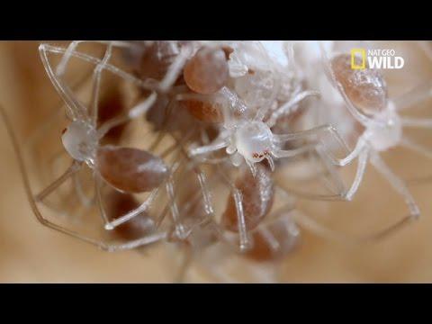 Les cocons s'ouvrent, voici les bébés araignées