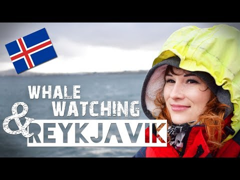 WHALE WATCHING & Reykjavik   ZuzArt