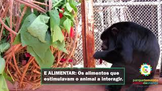 Enriquecimento Ambiental - Dia do macaco